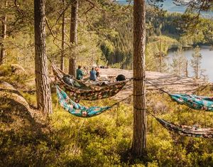 Outdoor hammock forest